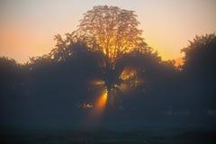Лучи восходящего солнца в утре Стоковое Изображение RF