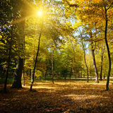 Лучи греют на солнце в парке осени Стоковое Изображение RF