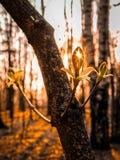 Лучи захода солнца выходя сквозь отверстие отверстие в лист дерева стоковые изображения