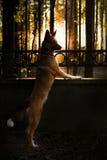 Лучи заходящего солнца Стоковое Фото