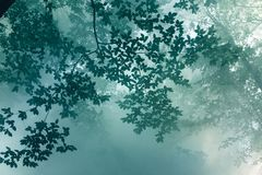 Лучи солнечного света делают путь через листья деревьев и Na тумана Стоковое Изображение RF