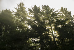Лучи солнечного света - Angled Стоковое фото RF