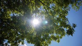 Лучи солнца в ветреной погоде сделать их путь через листья дерева Листья пошатывают под сильными ветерами Очень bea акции видеоматериалы