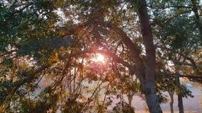 Лучи солнца делают их путь между ветвями и листьями деревьев видеоматериал