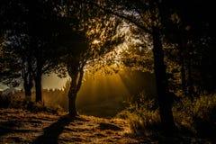 Лучи солнца за деревьями в лагуне Lazeta в Esquel стоковое фото rf