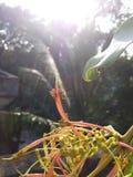 Лучи Солнца на лепестках красивого цветка стоковая фотография rf