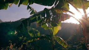 Лучи Солнца светя через листья ладони акции видеоматериалы