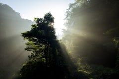 Лучи солнца утра Стоковое Изображение