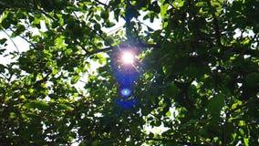 Лучи Солнца через верхнюю часть дерева сток-видео