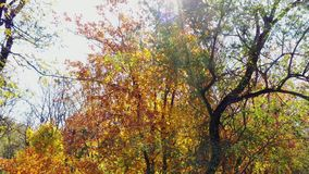 Лучи солнца через листья осени видеоматериал