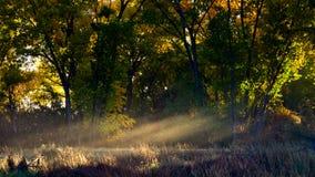 Лучи Солнца через туман в октябре стоковое фото