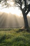 Лучи Солнця через туман и плюш носят Стоковые Фотографии RF
