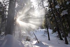 Лучи солнечного света светят через падая снег в лесе Стоковые Фото
