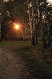 Лучи солнечного света через деревья Стоковая Фотография