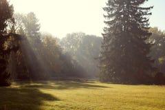 Лучи солнца делают в парке осени Стоковая Фотография