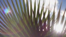 Лучи солнца делают их путь через ветви пальм акции видеоматериалы