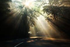 Лучи солнца на туманном утре. Стоковое Изображение RF