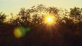 Лучи солнца через осень кустов видеоматериал