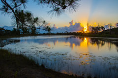 Лучи Солнця & конусы сосны над озером на восходе солнца Стоковое Изображение
