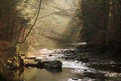 Лучи Солнця потока леса Стоковая Фотография
