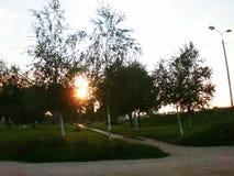Лучи Солнця через березы Стоковая Фотография