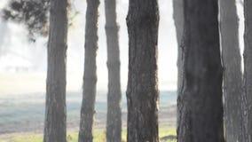 Лучи Солнця через туман в лесе видеоматериал