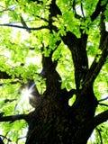 Лучи ` s солнца делают их путь через листья Стоковое фото RF