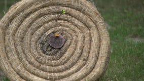 Лучник держит его смычок и стрелку всходов на цели Конкуренция Archery, люди направляя в центр цели выиграть приз Outd сток-видео