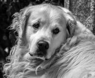 Лучший друг ` s человека Стоковая Фотография RF