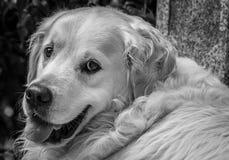 Лучший друг ` s человека Стоковое Изображение