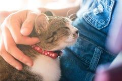 Лучший друг животного кота предпосылки милый на девушке женщин объятия и отростчатый мягкий фокус тонизируют Стоковые Фото