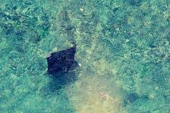 луч океана manta Мальдивов atoll addu индийский стоковая фотография rf
