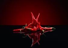 Луч перца красных чилей Стоковые Фотографии RF