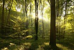 Луч солнечности Стоковая Фотография