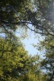 Луч солнца в зеленом лесе Стоковая Фотография RF