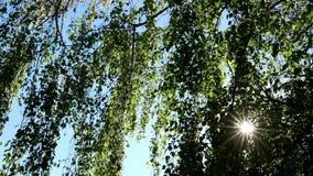 Луч Солнця через листья видеоматериал
