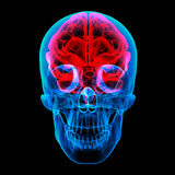 Луч человеческого мозга x Стоковые Фотографии RF