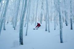 Лыжа Freeride в древесинах курорта масштаба alle Corno Стоковая Фотография RF