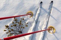 лыжи -следа и красные поляки лыжи на снеге с малой сосной Стоковое Изображение