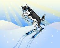 Лыжник собаки бесплатная иллюстрация
