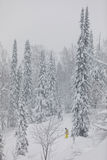 Лыжник Freeride в лесе Стоковые Фотографии RF