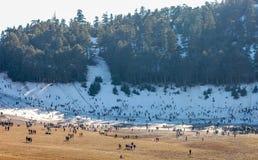 Лыжный район в ifran Марокко Стоковое Изображение