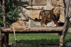 львев пар Стоковые Изображения RF