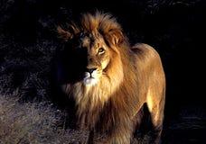 львев Стоковое Изображение RF