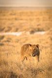 львев Стоковые Изображения RF