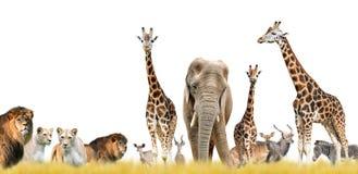 Львы, жирафы, слон и антилопы стоковые фотографии rf
