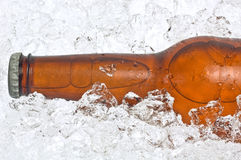 льдед бутылки пива задавленный концом вверх Стоковые Фотографии RF