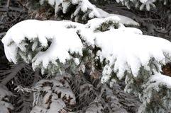 льдед ветвей стоковая фотография