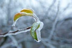 льдед ветви Стоковое фото RF