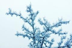 льдед кристаллов Стоковые Фото